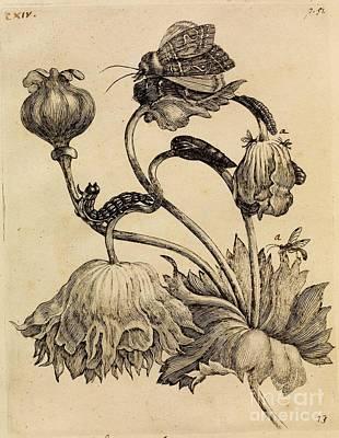 Erucarum Ortus Art Print by Celestial Images