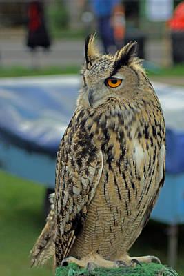 Photograph - European Eagle Owl by Tony Murtagh
