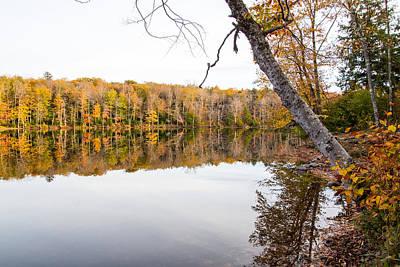 Rose - Fall foliage Mongaup State Park by Susan Jensen