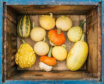 Fall Photograph - Fall by Viktor Pravdica