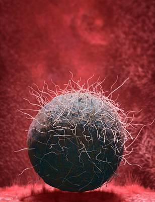 Fertilization Photograph - Fertilisation by Tim Vernon