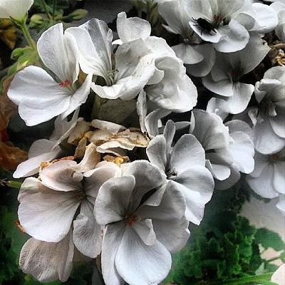 Florals Photograph - Floral by Ricardo Fernandez