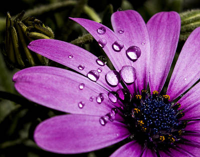 Photograph - Flower by Amr Miqdadi