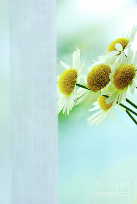 Queen Annes Lace Photograph - Flowers by HD Connelly