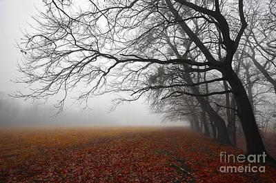 Photograph - Fog In Red by Bernadett Pusztai