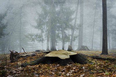 Photograph - Foggy Forest by Trish Tritz