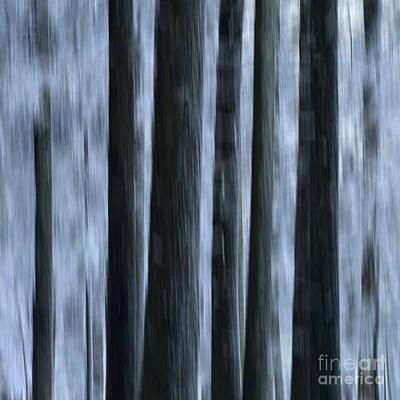 Forest Print by Bernard Jaubert