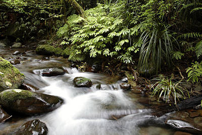 Spring Scenery Photograph - Forest Stream  by Les Cunliffe