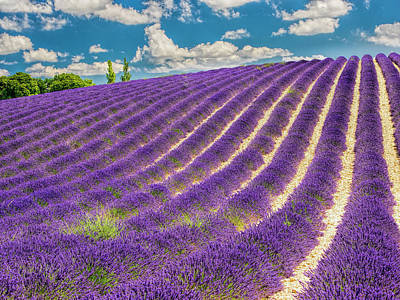 France, Provence, Lavender Field Art Print by Terry Eggers