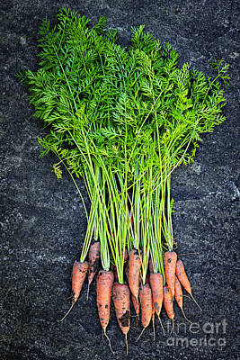 Photograph - Fresh Carrots From Garden by Elena Elisseeva