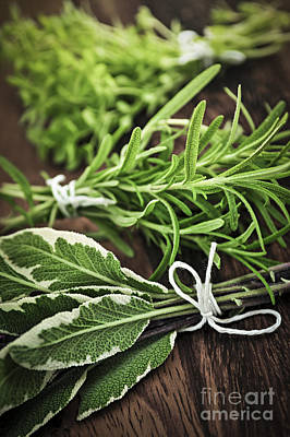 Rosemary Photograph - Fresh Herbs by Elena Elisseeva