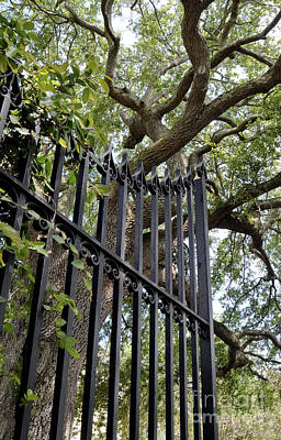 Photograph - Gates Of Charleston by Gina Savage
