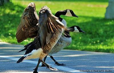 Geese Crossing Art Print