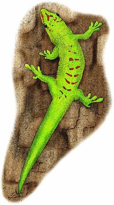 Giant Day Gecko Art Print
