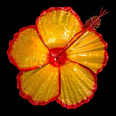 Giant Hibiscus Art Print by Diane Snider