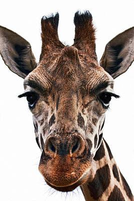 Stare Photograph - Giraffe by Marcia Colelli