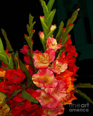 Art Print featuring the photograph Gladiolus by Merton Allen