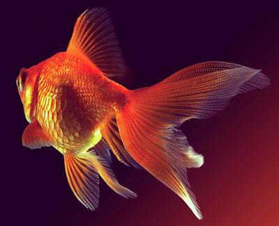 Goldfish Art Print by Mark Mawson