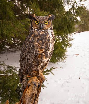 Great Horned Owl Art Print by Simon Jones