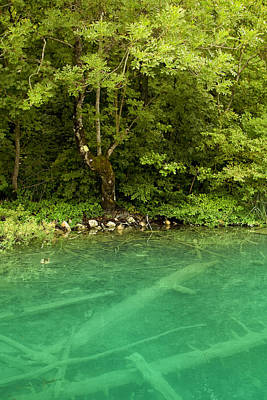 Abundance Photograph - Green Lake by Modern Art Prints