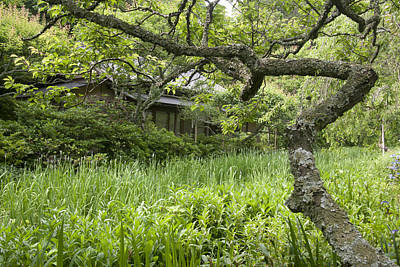 Photograph - Green by Masami Iida