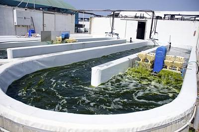 Growing Algae For Fish Food Art Print by PhotoStock-Israel