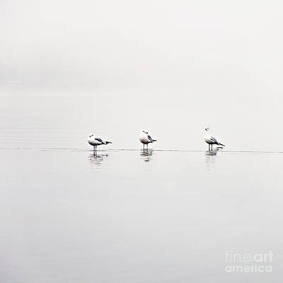 3 Gulls Art Print by Sylvia Cook