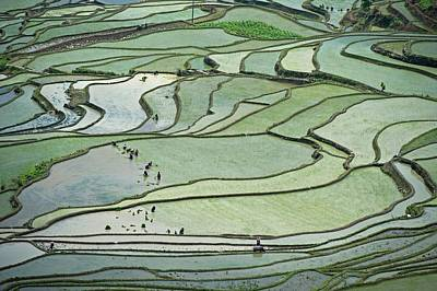 Hani Rice Terraces Near Yuanyang Art Print by Tony Camacho