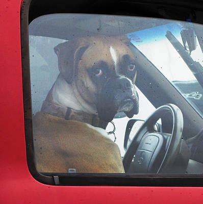 Boxer Dog Digital Art - Hate Waiting by Patricia Januszkiewicz