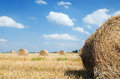 Harvested Photograph - Haystacks In The Field by Michal Bednarek