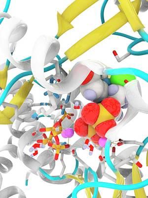 Hepatitis C Polymerase Enzyme Molecule Art Print by Ramon Andrade 3dciencia