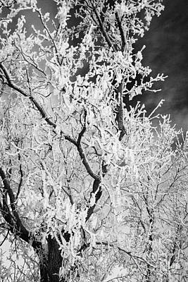 hoar frost on bare tree branches during winter Forget Saskatchewan Canada Art Print by Joe Fox