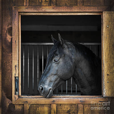 Animals Royalty-Free and Rights-Managed Images - Horse in stable by Elena Elisseeva