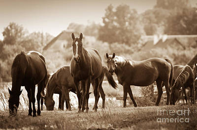 Mane Photograph - Horses On The Field by Michal Bednarek