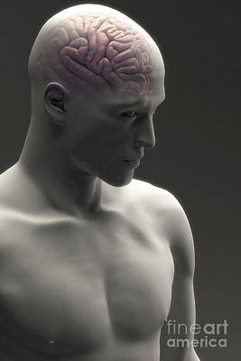 Human Brain Photograph - Human Brain Male by Science Picture Co