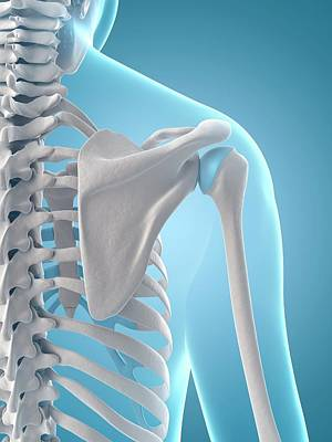 Human Shoulder Bones Art Print by Sebastian Kaulitzki