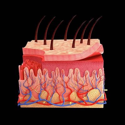 Biomedical Illustration Photograph - Human Skin by Pixologicstudio