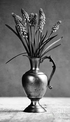 Hyacinths Photograph - Hyacinth Still Life by Nailia Schwarz