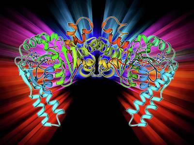 3-hydroxyacyl-coa Dehydrogenase Art Print by Laguna Design