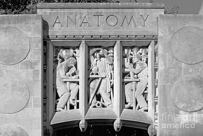 Indiana University Myers Hall Anatomy Art Print by University Icons