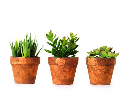 3 Indoor Plants Art Print by Boon Mee