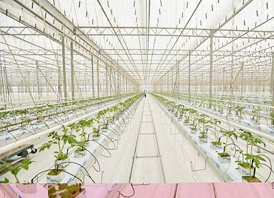 Industrial Greenhouse Art Print by Science Photo Library