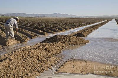 Photograph - Irrigation In Arizona Desert by Jim West
