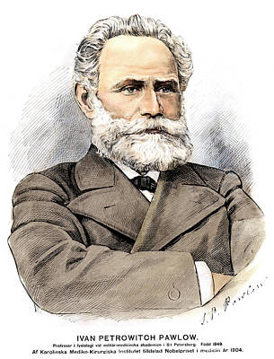 Drawing - Ivan Petrovich Pavlov (1849-1936) by Granger