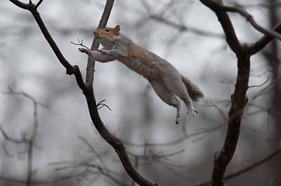 Photograph - Jumping Squirrel by Alex Grichenko