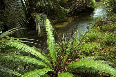 Jungle Stream Art Print by Les Cunliffe