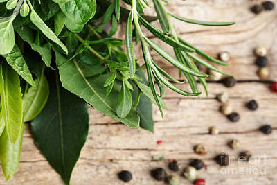 Peppers Photograph - Kitchen Herbs by Nailia Schwarz