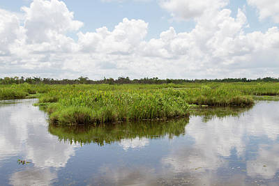 Bayou Photograph - La, Lafitte, Airboat Swamp Tour by Jamie and Judy Wild