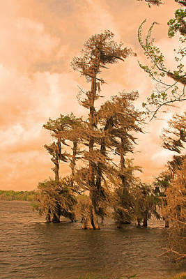 Photograph - Lake Martin Louisiana by Ronald Olivier