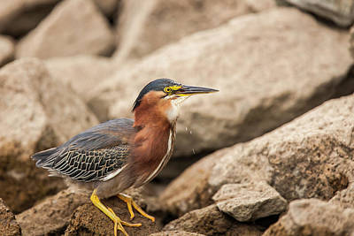 Swallow Photograph - Lake Murray San Diego, California by Michael Qualls